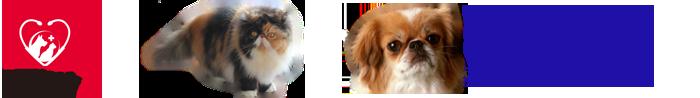 Petcore Veterinary Clinic