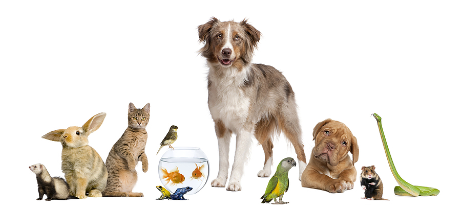 bigstock-group-of-pets-together-in-fron-82588721.jpg