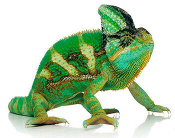 reptile-board.jpg